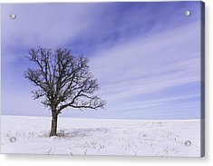 Tree On Hwy 59 Acrylic Print