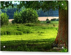 Tree On Summer Field Acrylic Print by Michal Bednarek