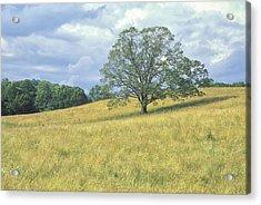 Tree On The Hill Acrylic Print