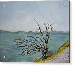 Tree On The Hudson River Acrylic Print