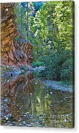 Acrylic Print featuring the photograph Tree Reflection by Mae Wertz