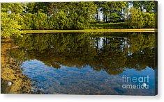 Tree Reflections Acrylic Print by Svetlana Sewell