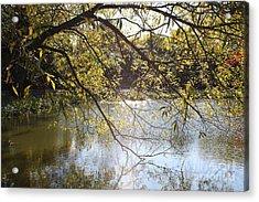 Tree Reflecting Off Lake Acrylic Print