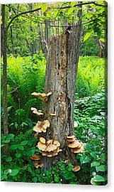 Tree Remnant Acrylic Print