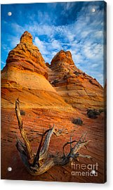 Tree Remnants Acrylic Print by Inge Johnsson