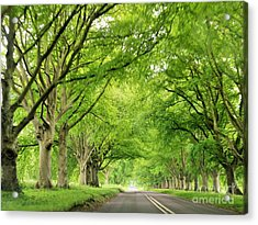Tree Avenue Acrylic Print