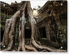 Tree Roots Growing Out Of Tah Prohm Acrylic Print