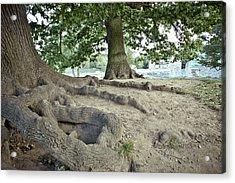 Tree Roots Acrylic Print by Tom Gowanlock