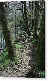 Tree Route Pathway Acrylic Print by Kathy Spall