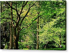 Acrylic Print featuring the photograph Tree Series 3 by Elf Evans