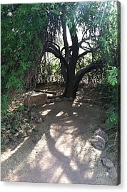 Tree Shadow Acrylic Print by Jack Edson Adams