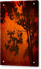 Tree Shadow On Fiery Wall Acrylic Print