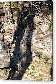 Tree Shadows Acrylic Print