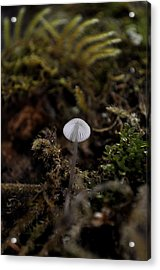 Tree 'shroom Acrylic Print by Cathy Mahnke