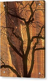 Acrylic Print featuring the photograph Tree Silhouette Against Sandstone Walls by Judi Baker