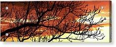Tree Silhouette At Sunset, Warner Acrylic Print