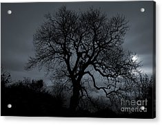 Tree Silhouette Acrylic Print by Ian Mitchell