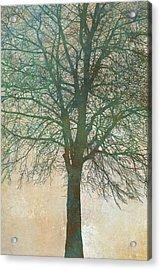 Tree Silhouette II Acrylic Print