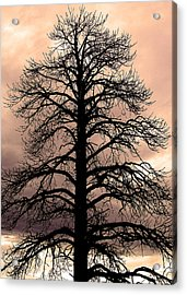 Tree Silhouette Acrylic Print by Laurel Powell