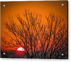 Tree Silhouetted By Irish Sunrise Acrylic Print