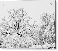 Tree Snow Acrylic Print