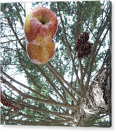 Tree Spiral Acrylic Print