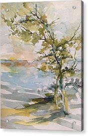 Tree Study Acrylic Print by Robin Miller-Bookhout