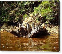 Tree Stump Filled With Rocks Acrylic Print