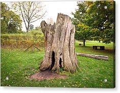 Tree Stump Acrylic Print by Tom Gowanlock