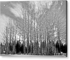 Tree Sweep Acrylic Print