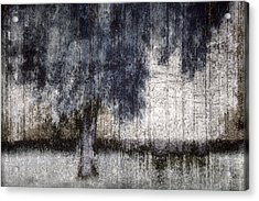 Tree Through Sheer Curtains Acrylic Print