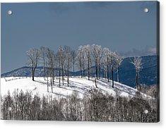 Tree Topper Hill Acrylic Print by John Haldane