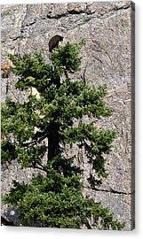Tree Topper Acrylic Print