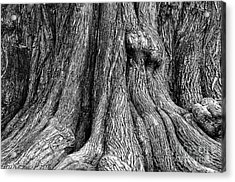 Tree Trunk Closeup Acrylic Print
