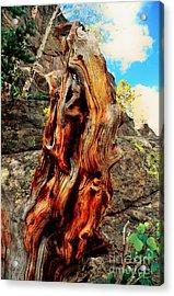 Tree Trunk Acrylic Print by Kathleen Struckle