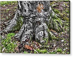 Tree Trunk Acrylic Print by Photographic Art by Russel Ray Photos