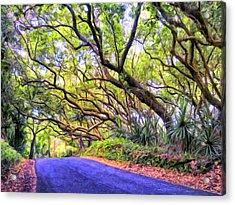 Tree Tunnel On The Big Island Acrylic Print