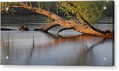 Tree Wash Acrylic Print by Theo O Connor