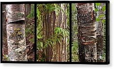 Tree Wear By Nature Acrylic Print by Sandi Mikuse