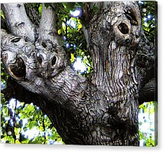 Tree With A Heart Acrylic Print by Dan Twyman