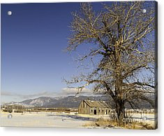 Acrylic Print featuring the photograph Tree With Barn by Sue Smith