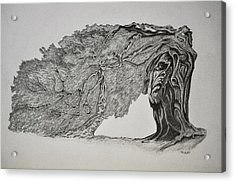 Tree With Faces Acrylic Print by Glenn Calloway