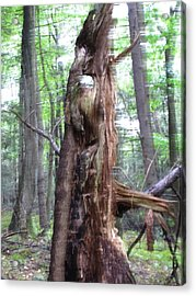 Tree With Faces Acrylic Print by Melissa Stoudt