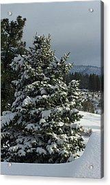Tree With Snow Acrylic Print
