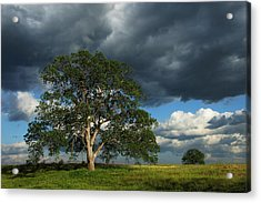 Tree With Storm Clouds Acrylic Print