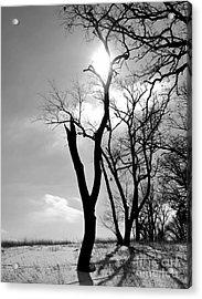 Tree3 Acrylic Print