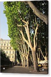 Treed Avenue Acrylic Print by Pema Hou