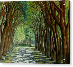 Treelined Walkway At Lsu In Shreveport Louisiana Acrylic Print