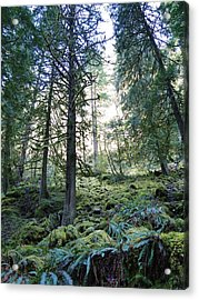 Treequility Acrylic Print by Athena Mckinzie