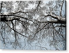 Trees  1 Acrylic Print by Minnie Lippiatt